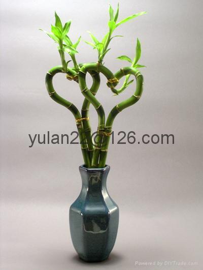 Heart lucky bamboo 2