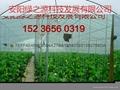 安陽綠之源蔬菜大棚建設