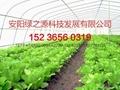 安阳绿之源蔬菜大棚建设