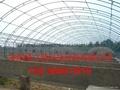 安陽綠之源養殖大棚建設