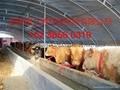 安陽綠之源養殖大棚建設 4