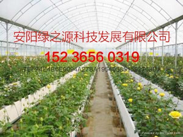 安陽綠之源花卉大棚建設 1