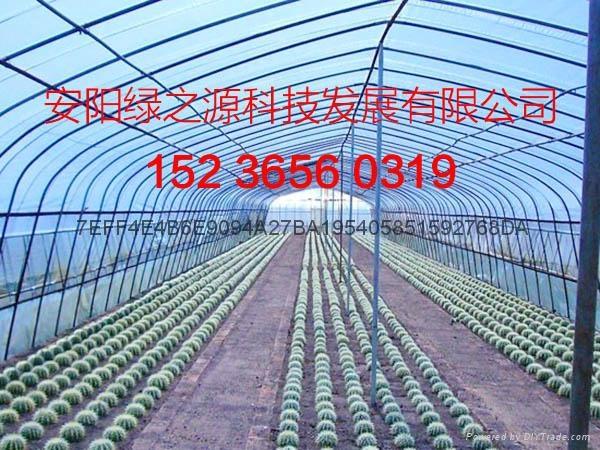 安陽綠之源花卉大棚建設 2