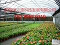 安陽綠之源花卉大棚建設 4