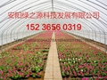 安陽綠之源花卉大棚建設 3