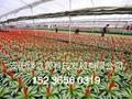 安陽綠之源花卉大棚建設 5