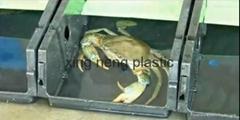 养青蟹箱养殖容器&箱大闸蟹养殖箱集约化养殖螃蟹