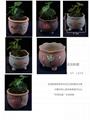 供應陶瓷多肉花盆 2