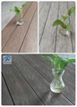 Wood Plastic composite (WPC) Decking& flooring(146X31mm) 4