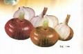 紅洋蔥Red Onion