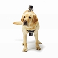 gopro fetch Dog Harness mount china factory outlet