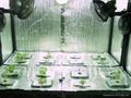 PE气珠复铝箔隔热材 4