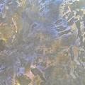 珠光三色 艺术漆幻彩漆 金属漆 4