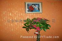 北京漆华仕高级金箔漆24K金漆 3