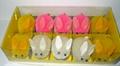 复活节小兔