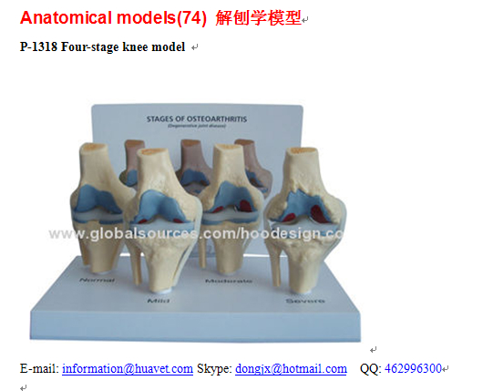 P-1318 Four-stage knee model