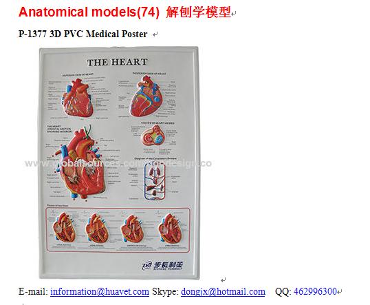 P-1377 3D PVC Medical Poster