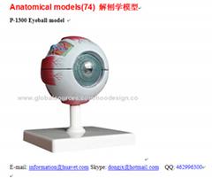 P-1300 Eyeball model
