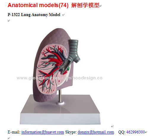 P-1322 Lung Anatomy Model
