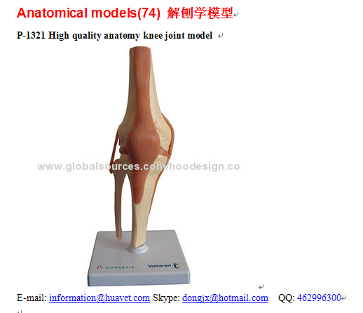 P-1321 High quality anatomy knee joint model