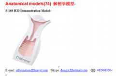 F-169 IUD Demonstration Model