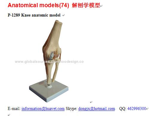 P 1289 knee anatomic model hoo design china manufacturer p 1289 knee anatomic model 1 ccuart Images