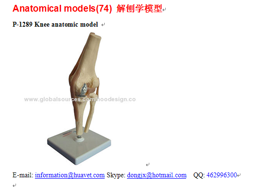 P-1289 Knee anatomic model