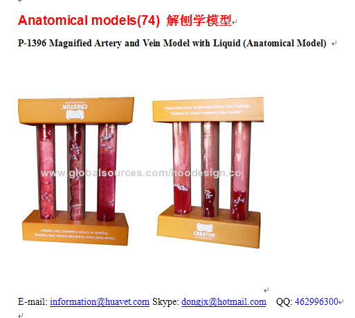 P-1396 Magnified Artery and Vein Model with Liquid (Anatomical Model)