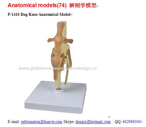 P-1410 Dog Knee Anatomical Model