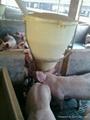 猪用干湿料槽