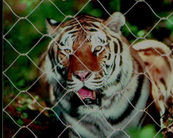 动物园隔离网 1