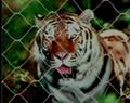 動物園隔離網