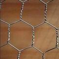 六角网 1
