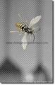 Alumium Insect screen WS-03