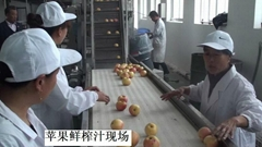 Fresh Apple Juice Production Line