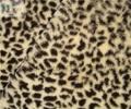 豹纹印花超细短毛绒 2