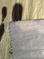 75D nylon bronzing 2