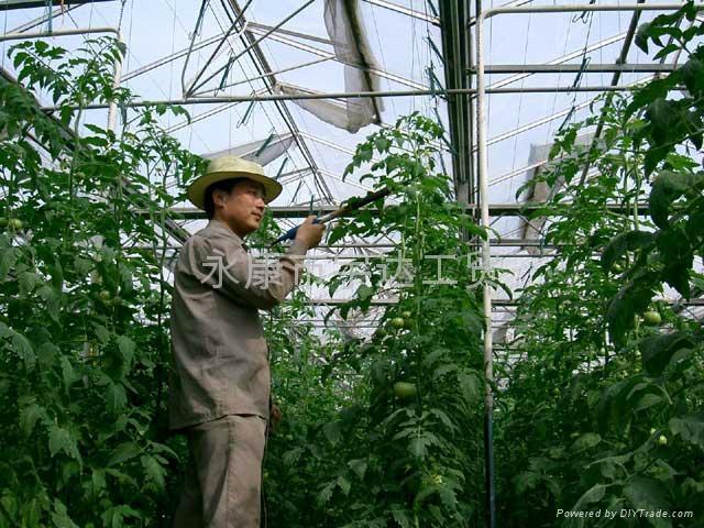 最新款臺灣SUCA電動番茄授粉器|西紅柿授粉器 2