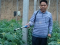 最新款臺灣SUCA電動番茄授粉器|西紅柿授粉器 3
