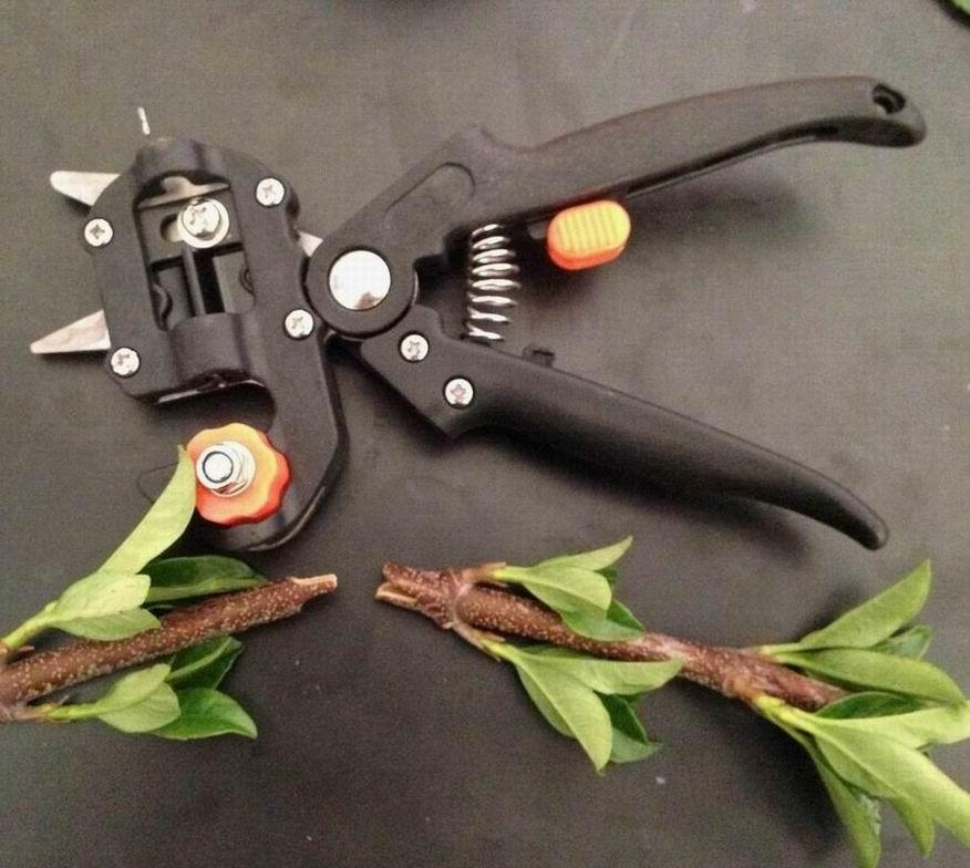 Grafting Supplies and Tools 1