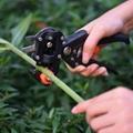 Garden branch grafting tools