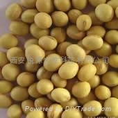磷脂酰絲氨酸