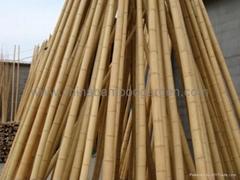 bamboo cane,pole,stake
