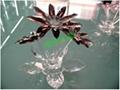 水晶蓮花 2