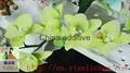 China food additive Polyglycerol polyricinoleate(PGPR) 3