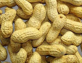 Peanut 6