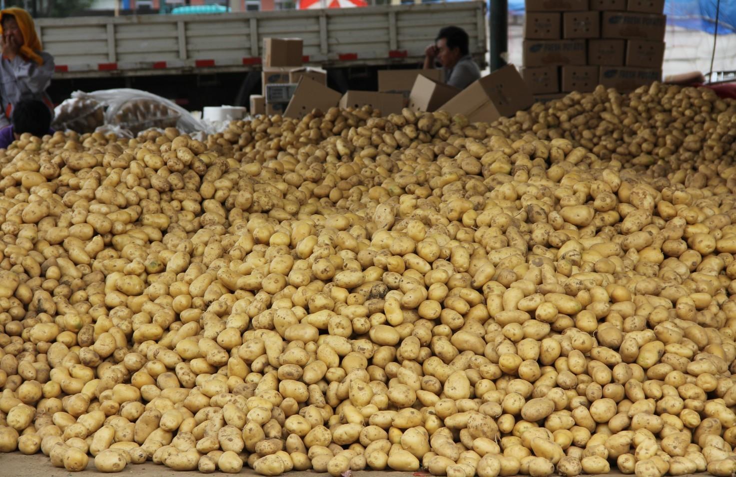 Potato 7