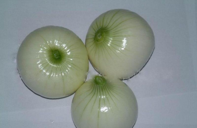 Onion 14