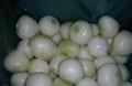 Onion 13