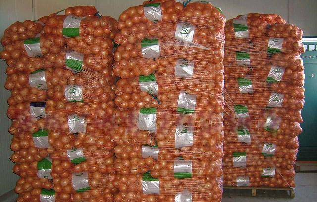 Onion 11